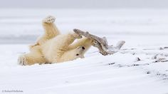5 Things You Didn't Already Know About Polar Bears