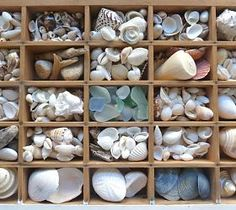 vintage printers tray with shells