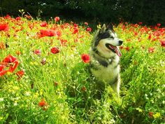 A pleasant place in a hot summer day - Dogs Wallpaper ID 680966 - Desktop Nexus Animals