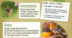 Attracting Birds to Your Yard Bird Food, Humming Bird Feeders, Backyard Birds, Petunias, Bird Feathers, Allergies, Lily, Gardens, Outdoor Gardens
