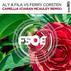 Aly And Fila, Alesso, Armin Van Buuren, Trance, My Favorite Things, Trance Music