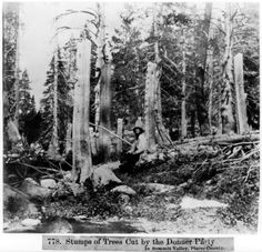 the donner party cannibals or not When looking at the donner company in 1987,  the donner party: cannibals or not essay most of us have all heard of the donner party they were the group.