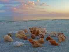 seashell - Google keresés