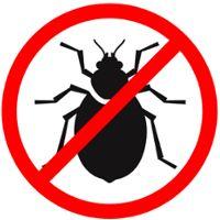 7 شركة حشرات المدينة المنورة Ideas Pest Control Best Pest Control Pest Control Services