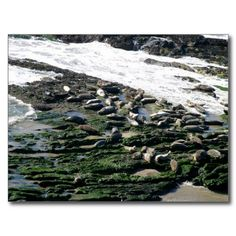 Carpinteria Seal Sanctuary Postcards $1.15