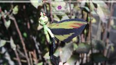 Hada jade Insects, Animals, Woods, Butterflies, Faeries, Animais, Animales, Animaux, Animal Books
