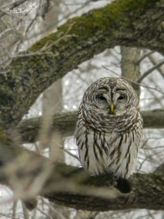 I took this owl today in Mason City IA