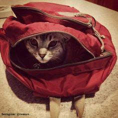 #LLBean CatPack via Instagram @ cwmars