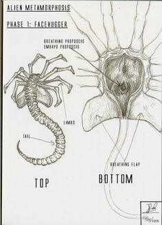 1000+ images about [Alien] Facehugger on Pinterest ... H.r. Giger Tattoo