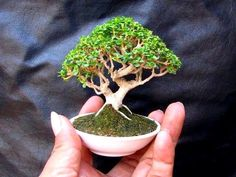 Bonsai.  I've never had any luck with Bonsai trees so I'm thinking of getting some clay and beads and see what I can come up with.