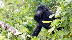 Uganda | © Wild Places Safaris