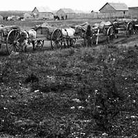 Hudson Bay Company fur transport – Red River carts, no date or location