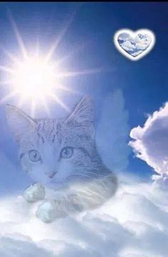 cat watching over you animals cats animal pets pet family quotes in memory rainbow bridge Souvenir Animal, Gato Angel, I Love Cats, Cute Cats, Pet Loss Grief, Cat Heaven, Pet Remembrance, Cat Watch, Cat Memorial