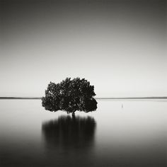 'Tenby Point Mangroves', Study 1, Tenby Point, VIC, 2015. Hasselblad 500cm + Kodak TMax 100 ...