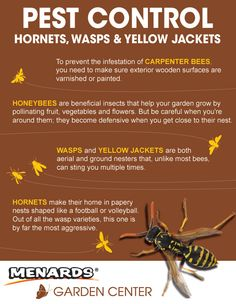 Learn more about the pests in your yard. Read full article: http://www.menards.com/main/c-19061.htm?utm_source=pinterest&utm_medium=social&utm_campaign=gardencenter&utm_content=bee-control&cm_mmc=pinterest-_-social-_-gardencenter-_-bee-control