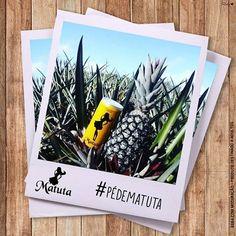 A Matuteira Edilany, da cidade de Sapé - PB, encontrou no seu quintal um pé de abacaxi que dá Cachaça Matuta! :o Amamos! <3    #CachaçaBrasileira#Inconfundível#SeBeberNãoDirija#Nordeste#Cachaça#EuSouMatuteiro#ParaMaioresDe18Anos#Brasil#CachaçaCristal#CachaçaBidestilada#Paraiba