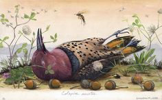 Northern Flicker - Andrew Leach Projects