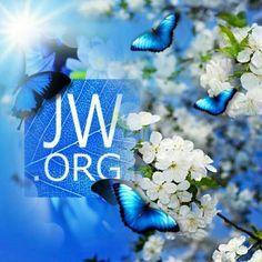 Jw.org Wallpaper Www jw org