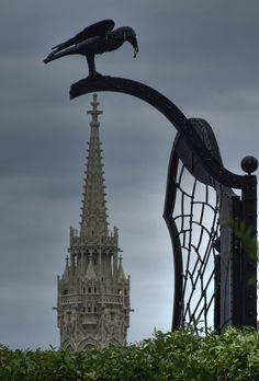 Matthias Churh on a Castle Hill with Black Raven,Budapest, Hungary