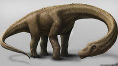 Descubren Esqueleto Fosilizado Del Dinosaurio Más Grande De La Prehistoria