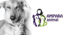 No Rio de Janeiro, animais resgatados esperam por chance de adoção - ANDA - Agência de Notícias de Direitos Animais
