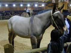 Give us your feedback horse breed All The Pretty Horses, Beautiful Horses, Draft Mule, Mules Animal, Horse Markings, All About Horses, Draft Horses, Horse Pictures, Horse Farms