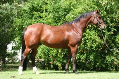 Judge Carol Dean asks if this horse has ever had an injury. Click the link to see why!
