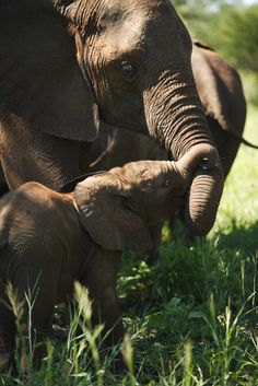 Elephant and her young calf by Wildcaster