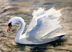 Time lapse video on watercolor swan