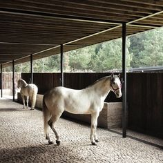 Australian Equestrian Centre Has A Curving Rammed Earth Wall Hacienda Pinterest Search
