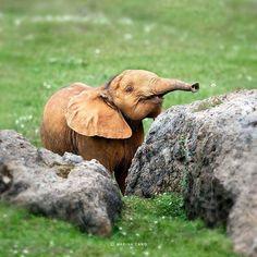 Sweet baby elephant