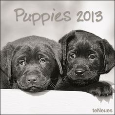 Puppies Wall Calendar: As soon as you open this delightful collection of black and white puppy photos you'll be able to smell the puppy breath and maybe even feel the unmistakable softness of puppy fur. A minute spent cuddling a puppy is worth an hour or so of therapy.  http://www.calendars.com/Puppies/Puppies-2013-Wall-Calendar/prod201300002603/?categoryId=cat00339=cat00339