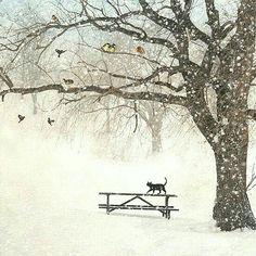 gattino nero sotto la neve bianca