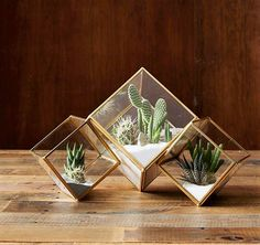 Truly amazing miniature gardens, terrariums are great for people who don't have enough garden space. Here are 5 easy steps on how to make a terrarium. Terrarium Cactus, Glass Terrarium, Small Terrarium, Glass Planter, Deco Floral, Cactus Y Suculentas, Cactus Flower, Décor Cactus, Flower Bookey