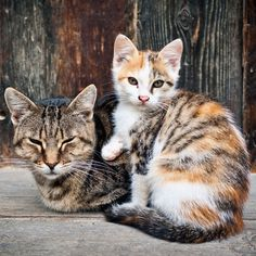 Humanely Control Feral Cat Population at The Animal Rescue Site - https://theanimalrescuesite.greatergood.com/store/ars/item/60064/humanely-control-feral-cat-population