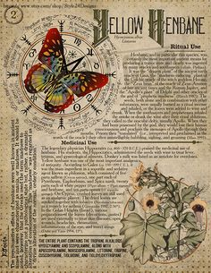 Yellow Henbane 2 Book of Shadows page Ritual Poisonous Plants Magic Herbs, Herbal Magic, O Ritual, Grimoire Book, Witch Spell, Wiccan Spells, Book Of Shadows, Occult, Herbalism