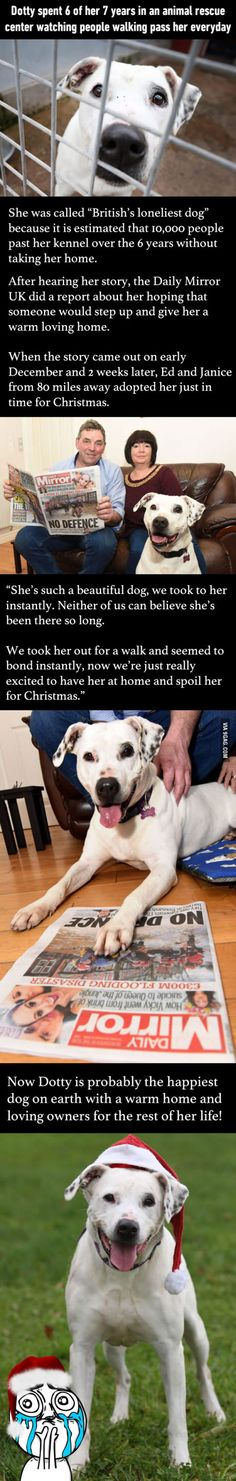 """The """"Loneliest Dog"""" In Britain Is No Longer """"Forever Alone"""" In This Christmas"""