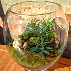 Terrariums are a good thing!