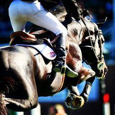 PRESLEY BOY love horses amazing heart jumping champion mexico pride