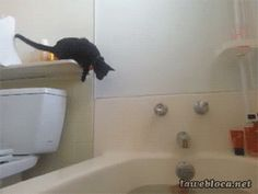 Clumsy cat tries to jump in bathtub but gets scared