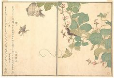 Bee and Caterpillar (Hachi and Kemushi), from Picture Book of Selected Insects with Crazy Poems (Ehon Mushi Erabi) Kitagawa Utamaro (Japanese, 1753–1806) 1788
