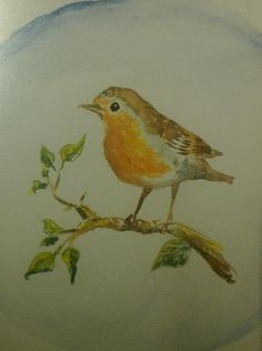 Robin aquarelle