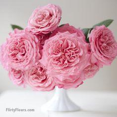 Flirty Fleurs Pink Garden Roses Study with Alexandra Farms - Ashley Pink Garden Rose Pink Bouquet, Bouquets, Bouquet Flowers, Color Magenta, Colour, Pink Garden, Garden Roses, Flower Chart, Rose Vase