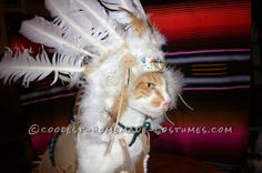 Coolest Indian Costume For a Cat... Coolest Halloween Costume Contest