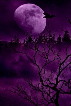 Lovely Midnight Purple Color Code