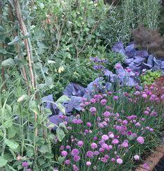 New Picture for Your Vegie Garden.