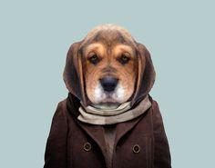 Beagle---Canis-Lupus-Familiaris-copia