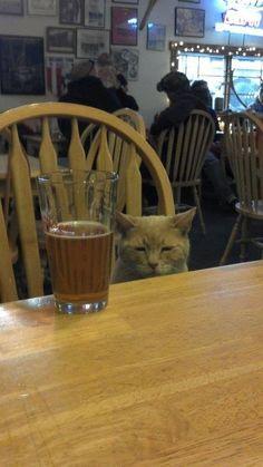 Stubbs. The cat mayor of Talkeetna, Alaska.