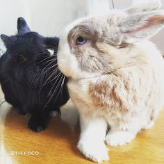 TRUE LOVE KISS  #tiffoandchany #truelove  Follow Tiffo & Chany on Instagram @tiffoco