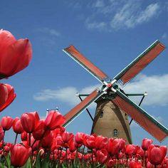Amsterdam 7 milionów tulipanów przepiękne ogrody Keukenhof  więcej informacji na stronie www.biurokolumb.pl wyjazdy weekendowe lub telefonicznie 697335432, 422335430  email biurokolumb@gmail.com  Cena od 199zł od osoby  Zapraszamy!